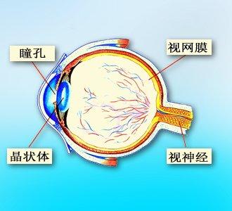 邸新:眼睛的解剖结构大体来说与照相机很类似.