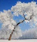 前方高能 咱辽宁的雪最终都成了这样
