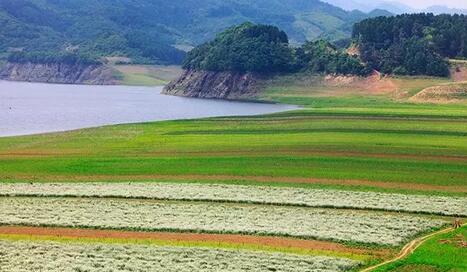 【夏天不得不去的4��地方】最美油菜花海不在青海,而在�|��—丹�|�G江村