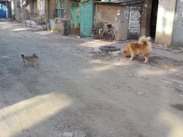 抚顺一残疾小狗在同伴嘴下乞食 结局很暖心
