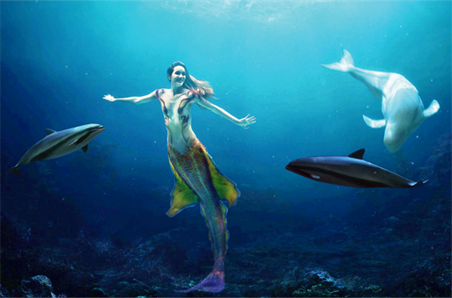 壁纸 动物 海底 海底世界 海洋馆 水族馆 鱼 鱼类 656_433