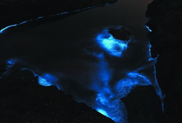 大黑石发光生物鉴定为夜光藻