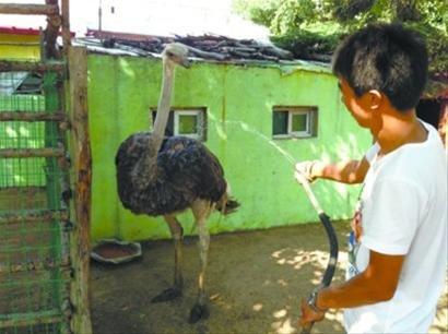 中山公园动物为消暑吃西瓜冲冷水澡