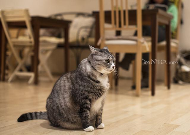 壁纸 动物 猫 猫咪 小猫 桌面 640_457