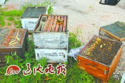 养蜂人毒死同行50余箱蜜蜂