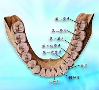 辽健康 人长了智齿为什么容易出现疼痛 -智齿冠周炎 大辽健康讲堂
