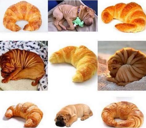 和宠物一模一样的美食 你能找出来吗