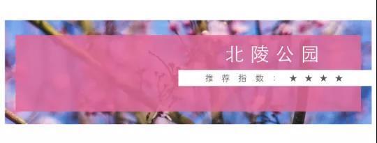 """2018沈阳最强赏桃花地图新鲜出炉 家门口也能看""""十里桃花"""""""