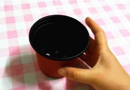 花式撩妹神技 教你制作盆栽蛋糕