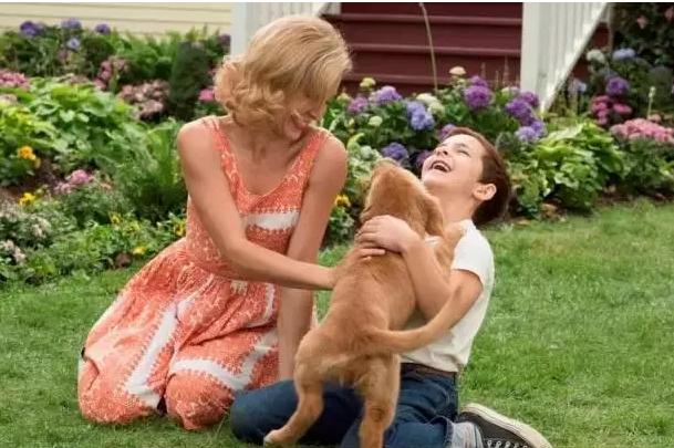 [有福利]免费带你去看催泪大片《一条狗的使命》