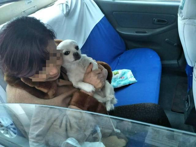 狗被撞后咬伤主人 狗主人抱狗坐进车5小时索赔120元