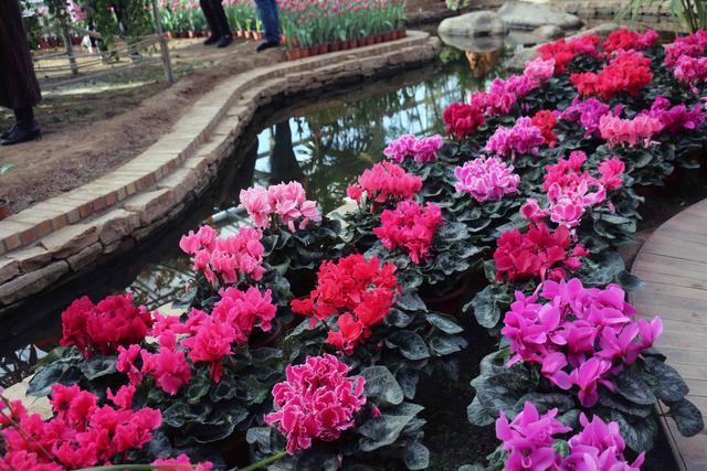 灯塔市辽峰小镇第二届赏花节邀你冬季来看花