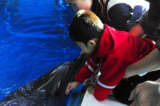 老虎滩海洋公园极地馆4月向孤独症儿童及家属免费开放