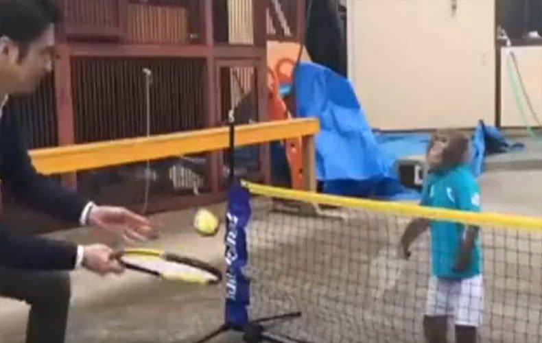 6岁猴子打网球视频走红网络 球技可能比你还要好