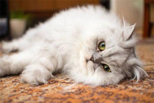 猫身上有螨虫的症状,猫咪长螨虫是什么症状
