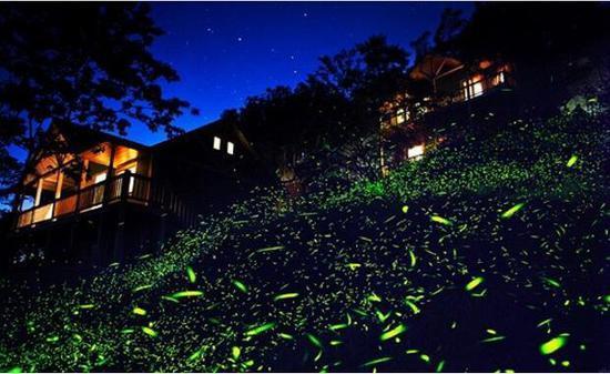 萤火虫灯具
