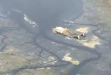 抚顺天湖大桥下惊现尸体 离岸边不远