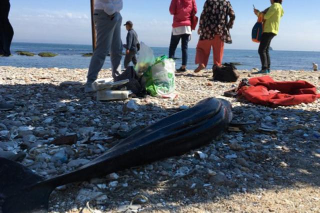 东亚江豚海滩上搁浅死亡 或因养殖筏架伤及所致