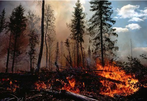 葫芦岛南票区大兴乡森林发生火灾
