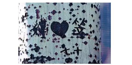 [大辽哥说]沈阳某公园杨树林,连续4年被刻字儿!