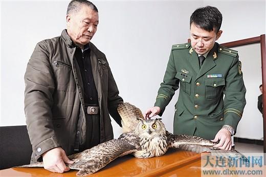 警民联手救助保护动物雕鸮