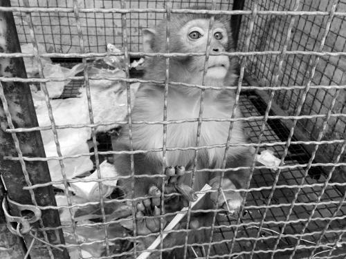 本来应该在野外和动物园才能看到的猴子,怎么能私自在居民区养?
