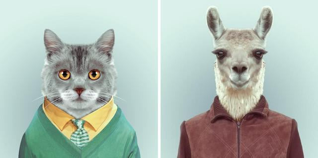 动物也有证件照 时髦透顶的动物肖像