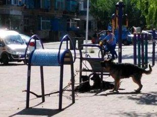 健身器材上天天栓3条大狼狗吓坏学生