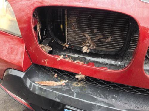 宝马车因野鸡冲撞而受损。
