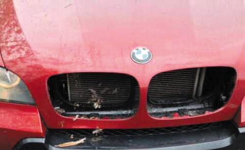 宝马车上高速遭遇野鸡偷袭