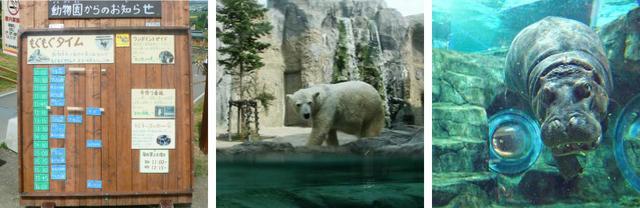 """畅游旭山动物园的关键在于""""吃饭时间"""""""