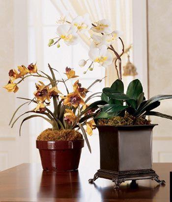 植物与摩羯座