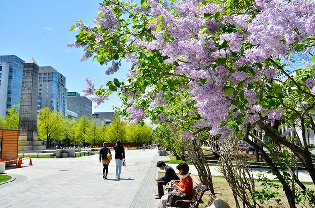 春季旅游首选北海道!春季活动特辑part1