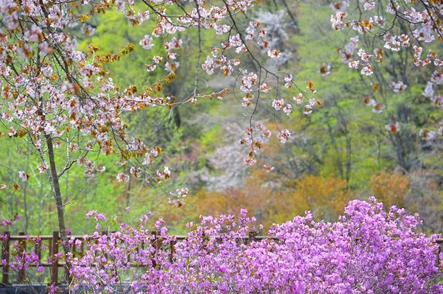 充满北海道风情的十胜地区赏花圣地