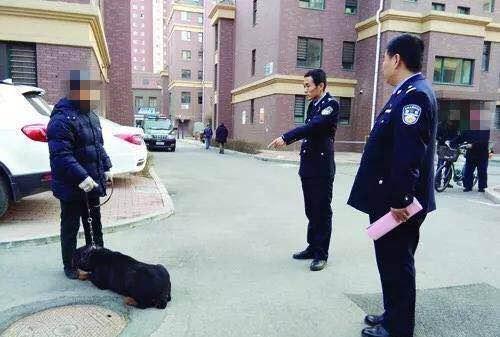 """辽阳男子牵烈性犬""""逛街"""" 民警""""闪现""""把狗扣了"""