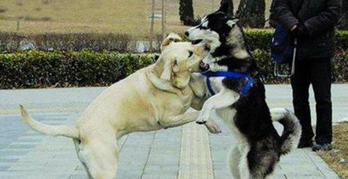 因遛狗俩妇女起冲突 伤人者被判赔数万元