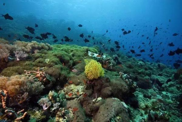 珊瑚礁环带 很难相信这么多惊艳的旅游元素竟然融合在一个小岛上