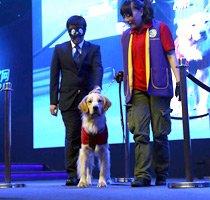 现场嘉宾体验导盲犬引路