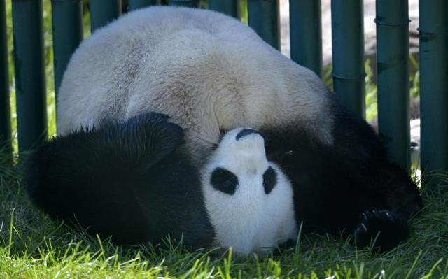 """沈阳动物园请来的""""千金""""变""""少爷"""""""