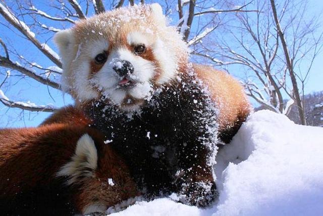 冬天是我们的大象北极熊有一个成语的季节是图片