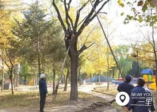 葫芦岛2万余棵树木已涂白 不仅保温还杀菌