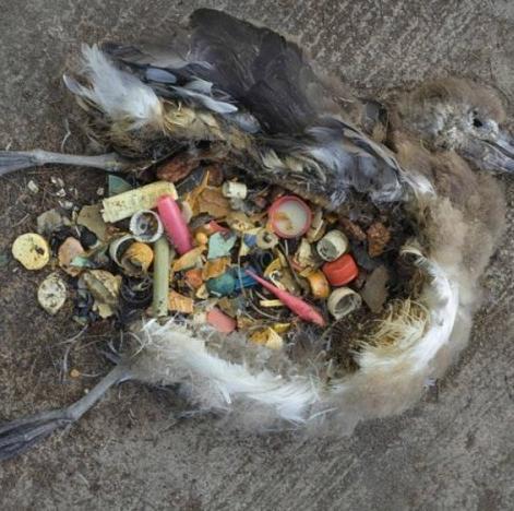 """环境污染日益严重的今天,人们处在一个""""商女不知亡国恨,隔江犹唱后"""