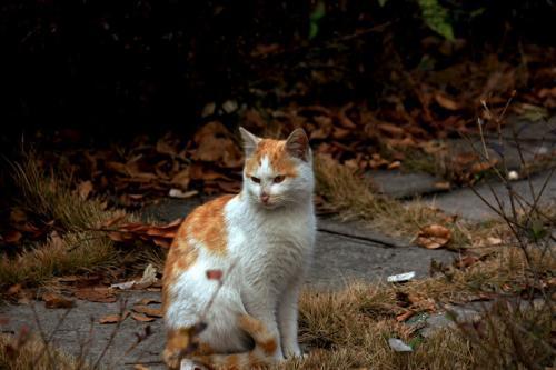 壁纸 365棋牌娱乐城_365棋牌唯一官网活动_365棋牌电脑下载手机版下载 猫 猫咪 小猫 桌面 500_333