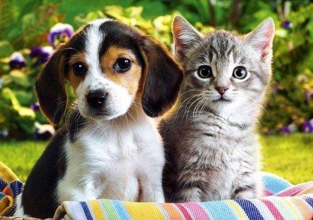 宠物保险的优劣势 国内宠物保险图片