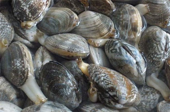这些冬季美味的海鲜大连人独享!