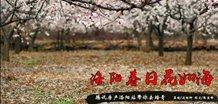 花城印象:洛阳春日花如海
