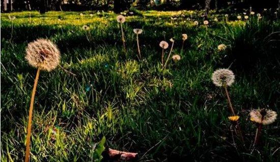 联信熙园:每个人的心中都有一亩梦田|熙园采摘集结号