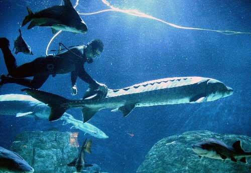 壁纸 动物 海底 海底世界 海洋馆 水族馆 鱼 鱼类 500_345