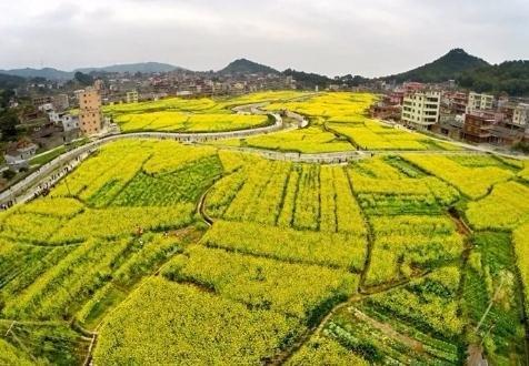 泉州:全域旅游来助力 虹山油菜花文化节再添新亮点