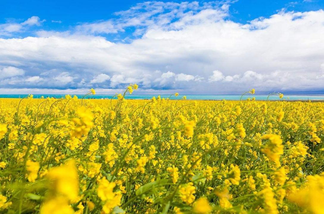 赏花游价格这个春天更亲民 旺季从3月持续到4月下旬